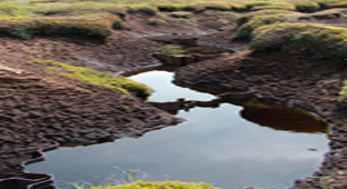 Picture of a peat bog
